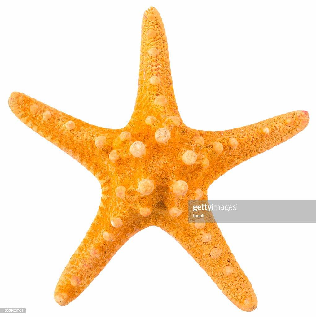 orange coral isolated : Stock Photo