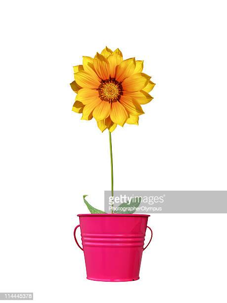 orange daisy in red pot xl - gerbera stock pictures, royalty-free photos & images