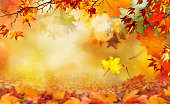 orange fall  leaves autumn background