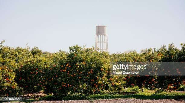 orange field - valencia fotografías e imágenes de stock