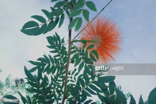 orange flower blooming on green plant - briel stock pictures, royalty-free photos & images