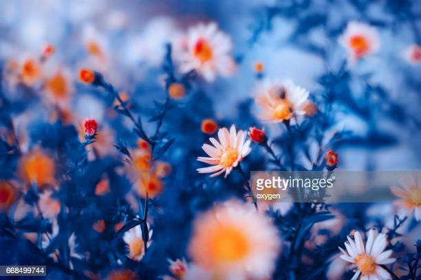 orange flower in blue background - dark blue stock pictures, royalty-free photos & images