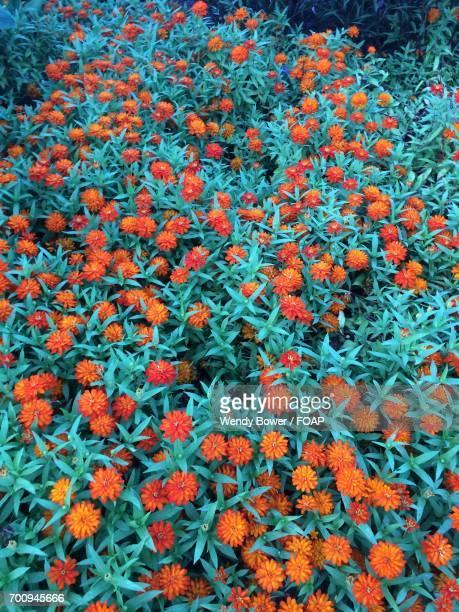 Orange Flowering plants