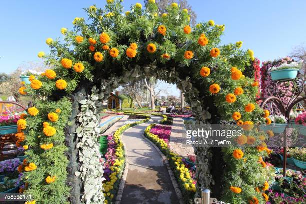 orange flowers on arbor at entrance of zawra park - baghdad stock pictures, royalty-free photos & images