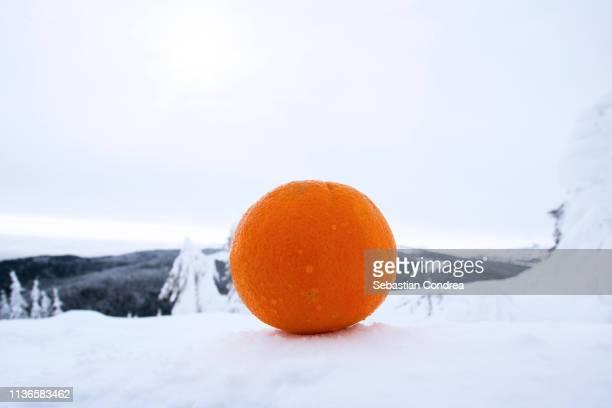 Orange fruit against winter, cloud sky, frozen.