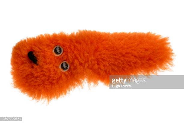 orange fuzzy caterpillar toy that squirms when rubbed. - hugh threlfall stock pictures, royalty-free photos & images
