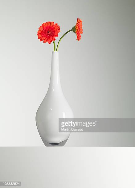 Orange gerbera daisies in vase