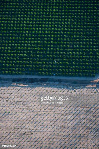 orange grove and vineyard divided by road, high angle view, temecula, california, usa - grove_(nature) stock pictures, royalty-free photos & images