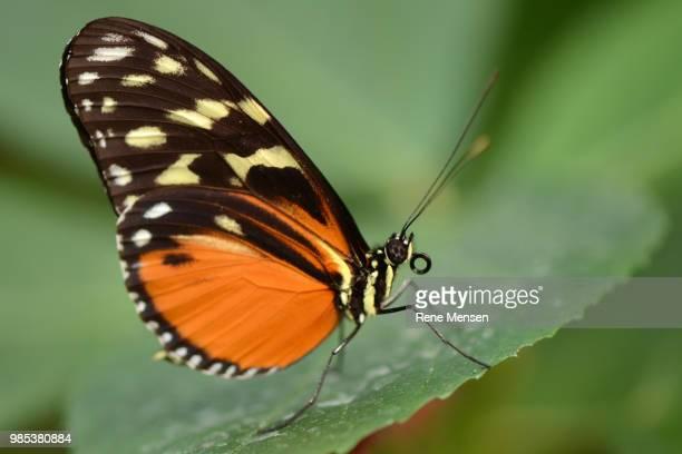 orange longwing - mensen stock pictures, royalty-free photos & images