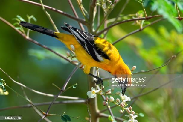 60 Top Moringa Oleifera Pictures, Photos, & Images - Getty