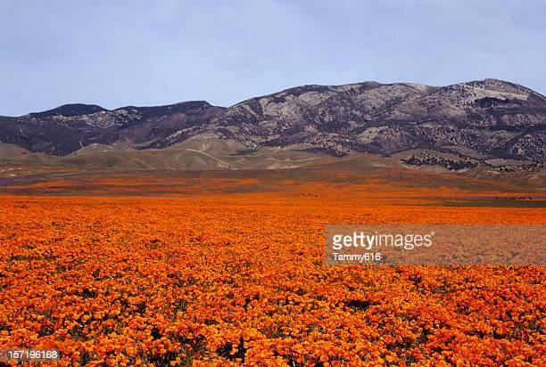 Orange Pasture