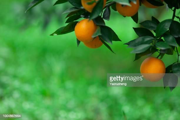 Orange plant garden