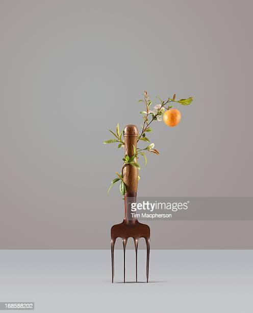 orange plant growing around garden fork - gardening equipment stock pictures, royalty-free photos & images