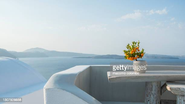 orange plant in pot on terrace with sea in background - mediterranean culture stock pictures, royalty-free photos & images