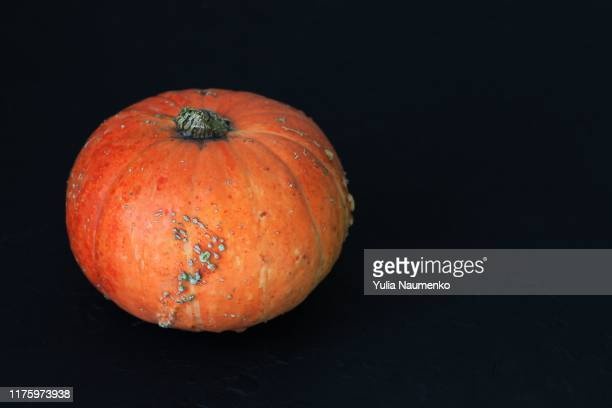 orange pumpkin on a black background. halloween and thanksgiving traditional decoration. copy space. - ugly pumpkins stock photos and pictures