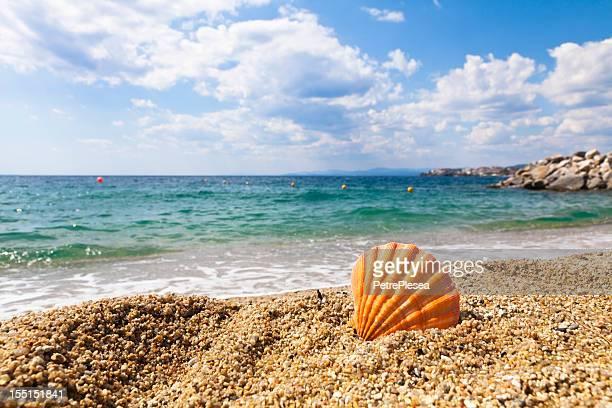 Orange Shell on the Ocean Shore. Summer Vacations.