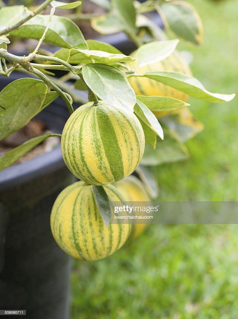 orange spotted tree : Stockfoto