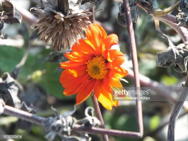 orange summer - noreen braman stock pictures, royalty-free photos & images