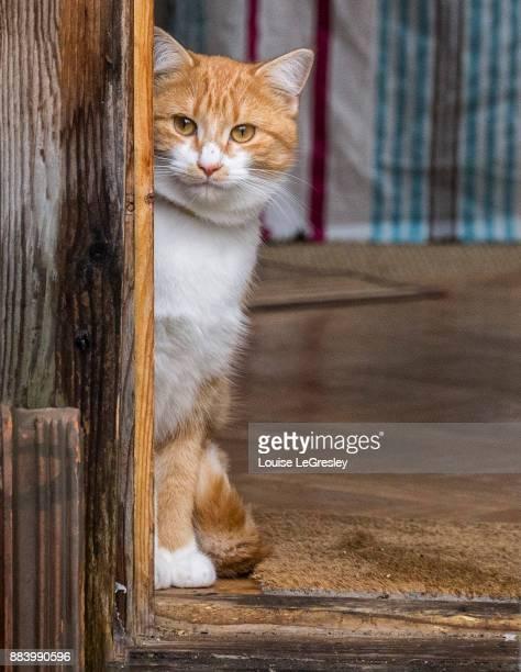 Orange tabby cat sitting by the door