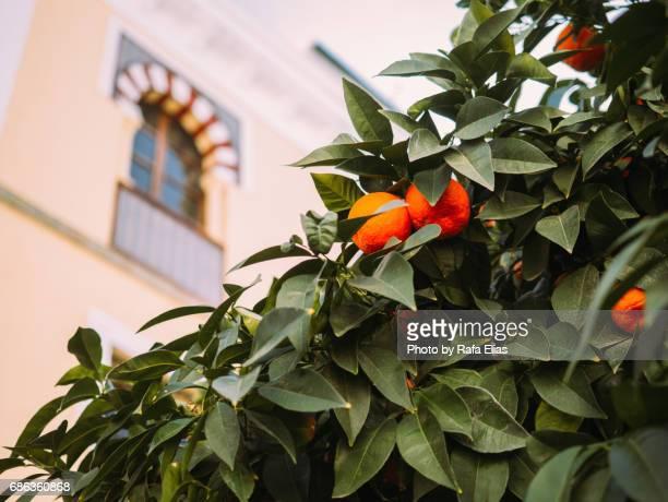 Orange tree and window on the background