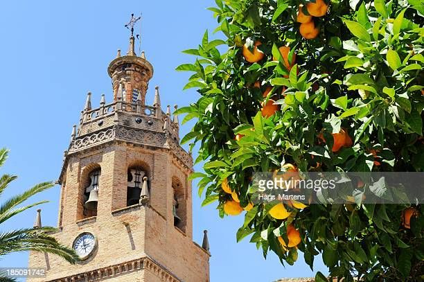 Orange tree in front of bell tower Ronda, Andalusia, Spain