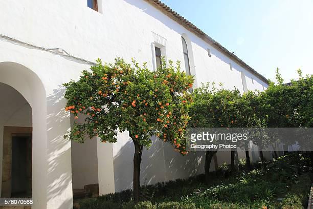 Orange trees in courtyard gardens of the Alc‡zar de los Reyes Cristianos Alcazar Cordoba Spain