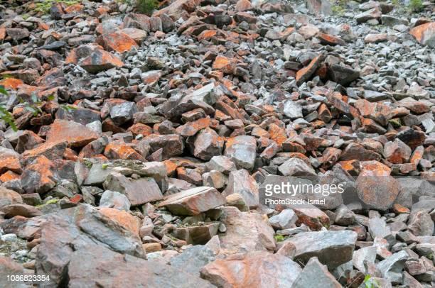 orange trentepohlia sp. alga - wasser imagens e fotografias de stock
