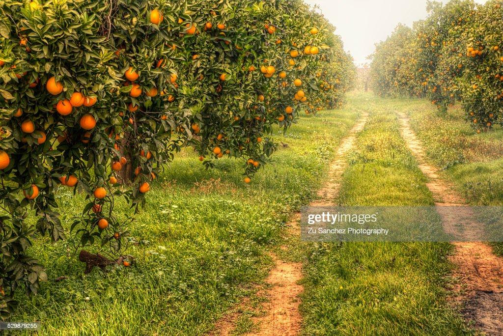 Orange way : Stock Photo