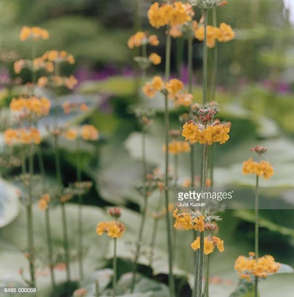 Orange Wildflowers