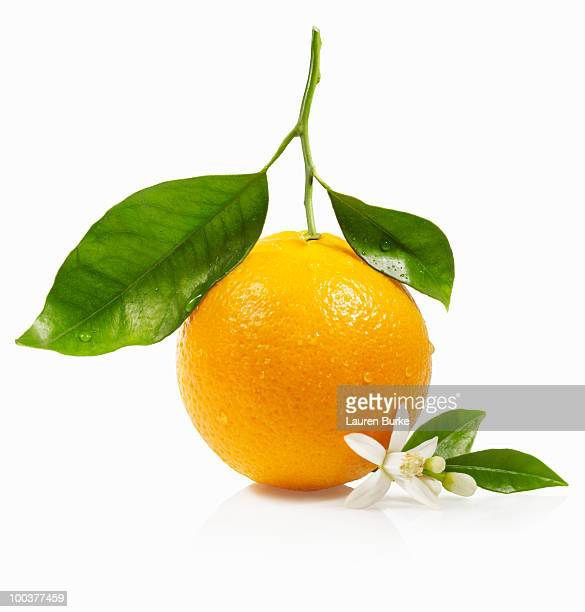orange with leaves and blossom - orange blossom stock photos and pictures