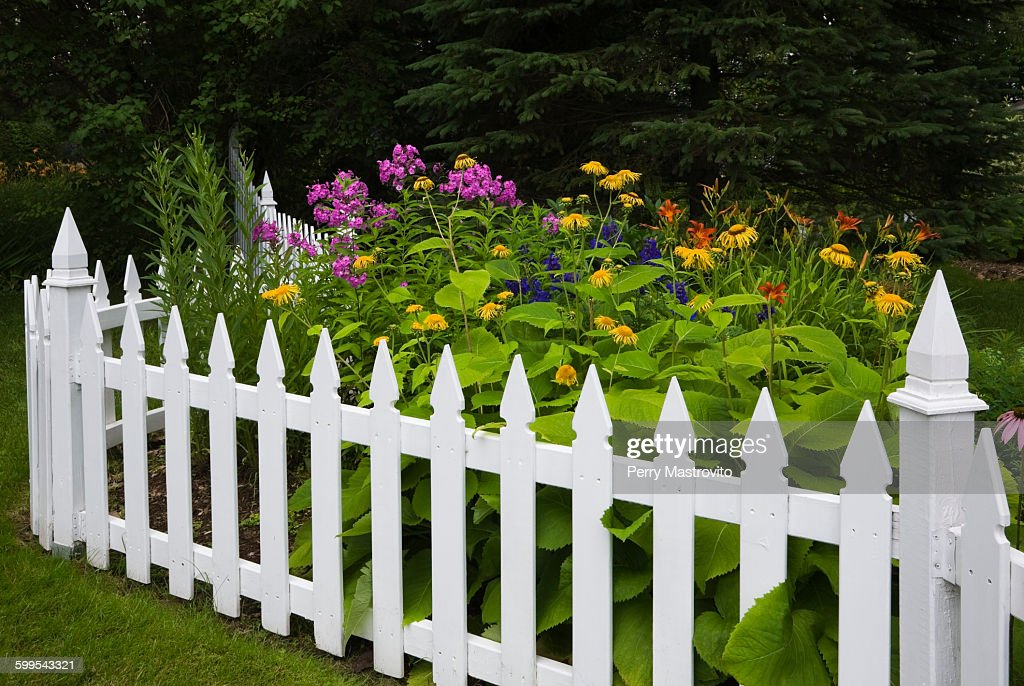 Orange, yellow and purple flowers surrounded by white picket fence : ストックフォト