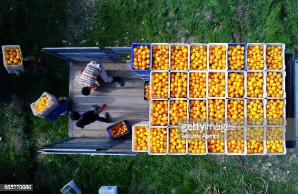 Oranges are being loaded on a truck after the harvest in Finike district of Antalya Turkey on November 30 2017 Orange harvest began 20 days ago...