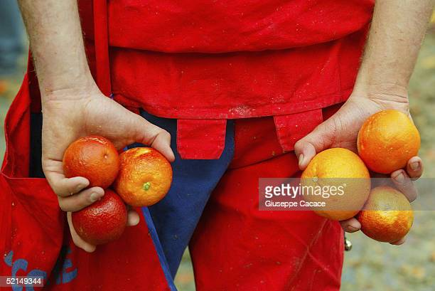 Oranges are seen in the hands of an orange thrower during the Orange Battle at the 2005 Ivrea Carnival on February 6 2005 in Ivrea Italy During the...