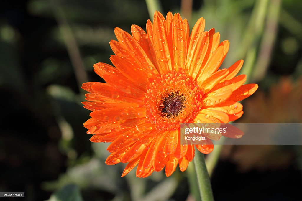 Orange fleurs : Photo