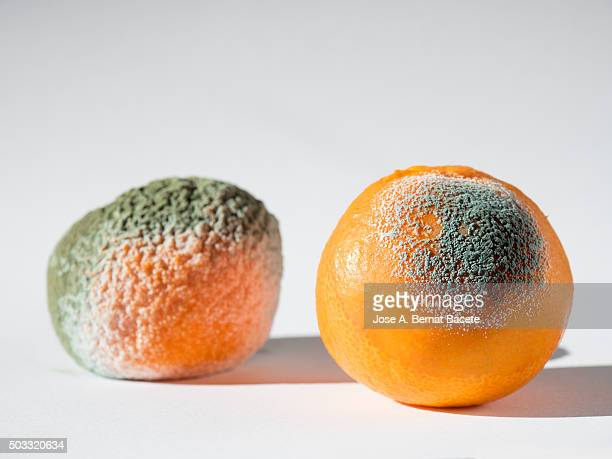 Oranges with mould, close-up