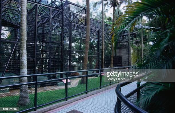 Orangutan ( Pongo pygmaeus ) enclosure at Hong Kong's Zoological and Botanical Gardens