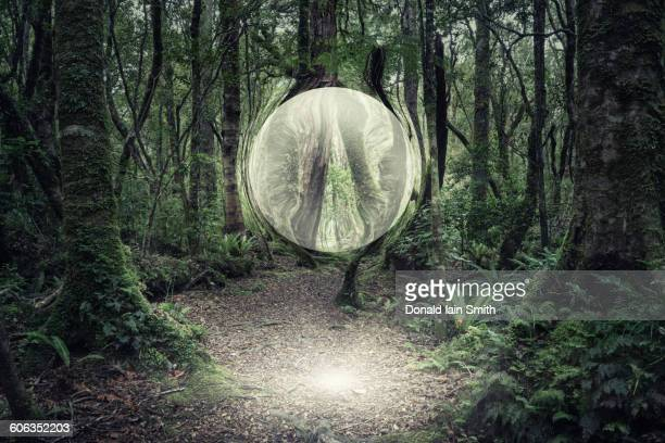 Orb glowing in forest