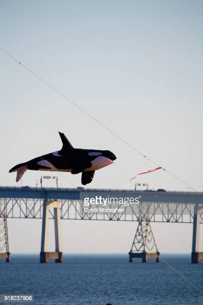 orca whale kite flying at the chesapeake bay bridge - chesapeake bay bridge stock pictures, royalty-free photos & images