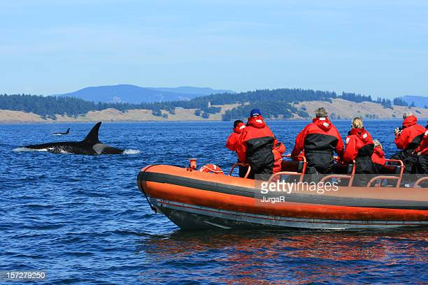 orca whale watching tourists on zodiac boat canada - vancouver island stockfoto's en -beelden