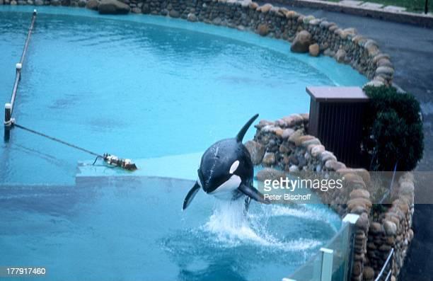 OrcaWal Vorstellung Meeresthemenpark 'Seaworld Orlando' Florida Nordamerika USA Zuschauer TierDressur Schwimmbecken Becken Pool Meerwasserbecken...