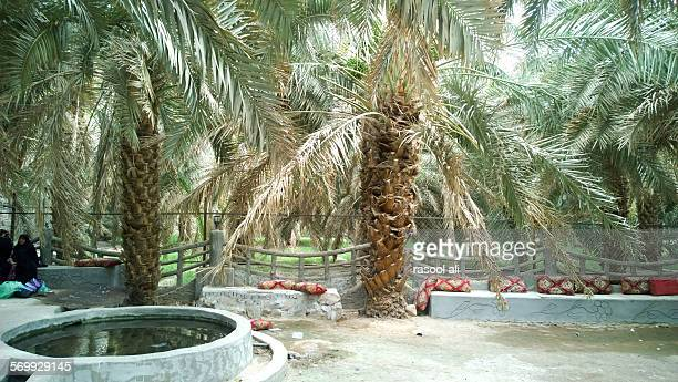 orchard imam hassan - al madinah stock photos and pictures