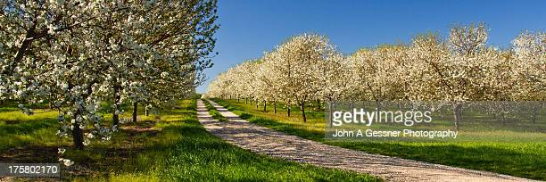 orchards as far as the eye can see - leelanau county  michigan stock pictures, royalty-free photos & images