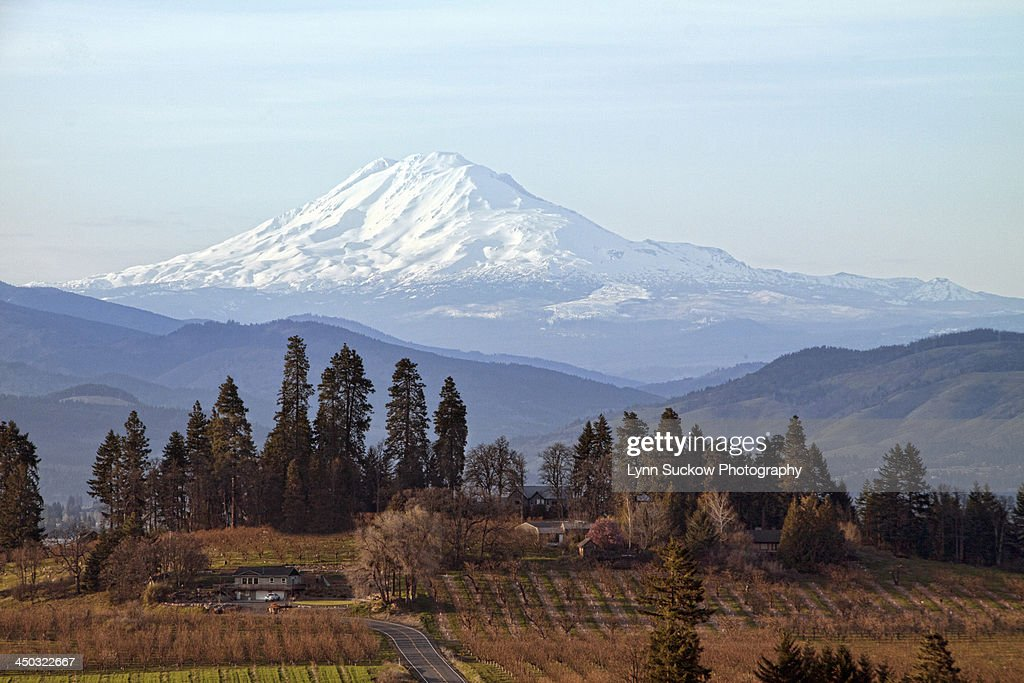Orchards in Oregon with Mt Adams in Washington : Stock Photo