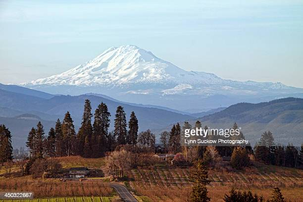 Orchards in Oregon with Mt Adams in Washington