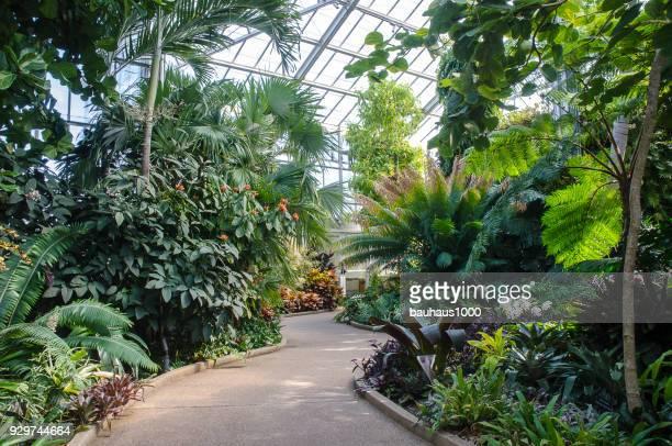 conservatoire d'orchidées au jardin botanique de daniel stowe - exotisme photos et images de collection