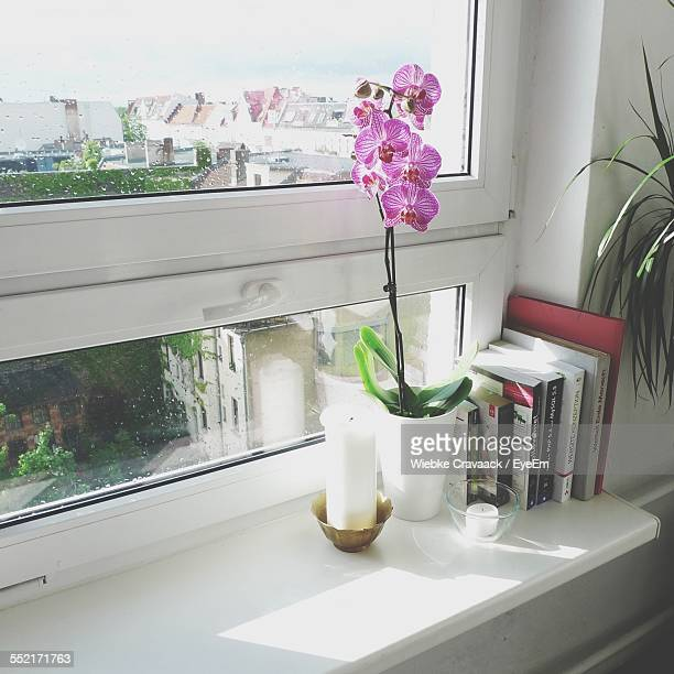 Orchid Flower On Window Sill