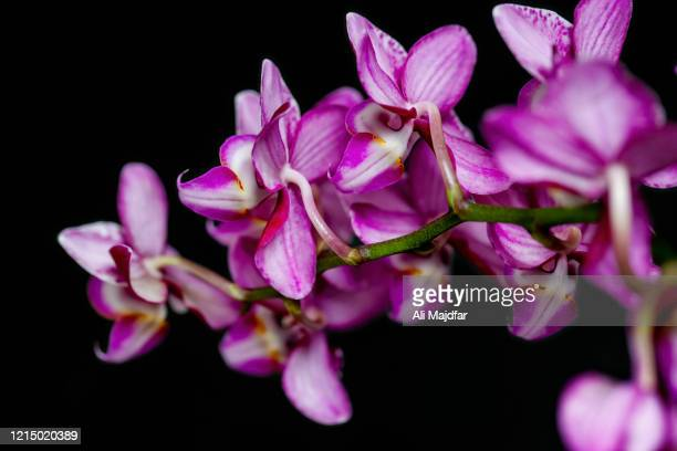orchid flower - vector illustrations stock pictures, royalty-free photos & images