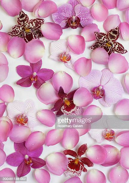 Orchid flowers and rose petals on fabric, close-up