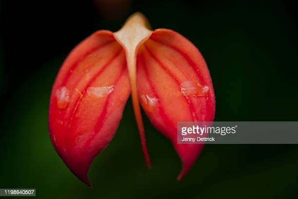 orchid flowers - wet stock pictures, royalty-free photos & images