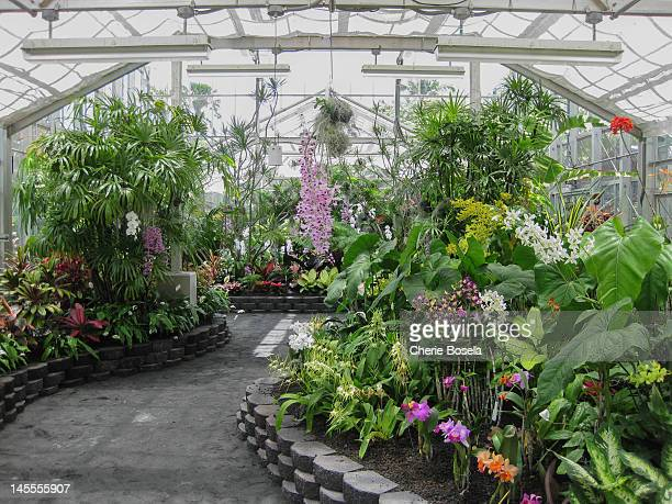 Orchid Greenhouse at the Foster Botanical Gardens in Honolulu, HI